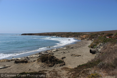 Group of Elephant Seals along the Pacific Coast Highway, California