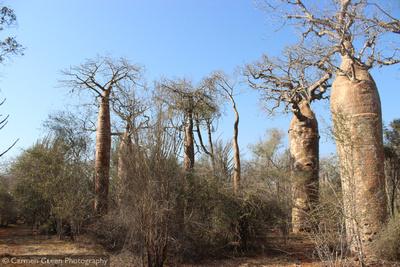 Reniala Reserve, Ifaty, Madagascar